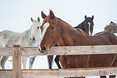HOR 01 MB0342 01