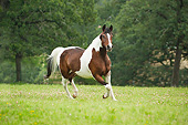 HOR 01 MB0343 01