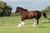HOR 01 MB0344 01