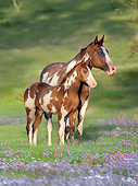 HOR 01 MB0345 01