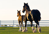 HOR 01 MB0346 01