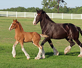 HOR 01 MB0347 01