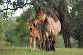 HOR 01 MB0352 01
