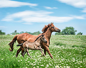 HOR 01 MB0357 01