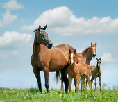 HOR 01 MB0358 01