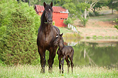 HOR 01 MB0360 01