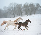 HOR 01 MB0362 01