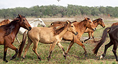 HOR 01 MB0366 01