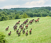 HOR 01 MB0370 01