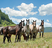 HOR 01 MB0371 01
