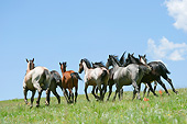 HOR 01 MB0372 01