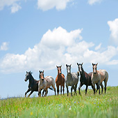 HOR 01 MB0373 01