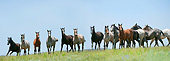 HOR 01 MB0374 01