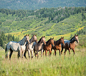 HOR 01 MB0379 01