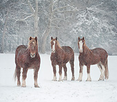 HOR 01 MB0381 01