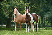 HOR 01 MB0384 01
