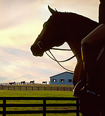 HOR 01 MB0388 01