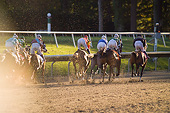 HOR 01 MB0392 01
