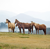 HOR 01 MB0393 01
