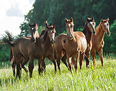 HOR 01 MB0395 01