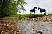HOR 01 MB0399 01
