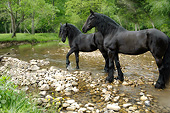 HOR 01 MB0400 01