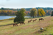 HOR 01 MB0411 01