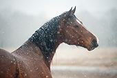 HOR 01 MB0413 01