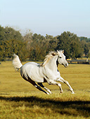 HOR 01 MB0416 01