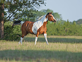 HOR 01 MB0417 01