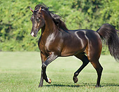 HOR 01 MB0419 01