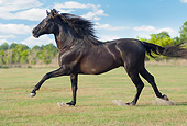 HOR 01 MB0420 01