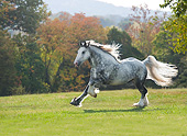 HOR 01 MB0422 01