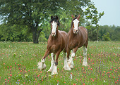 HOR 01 MB0423 01