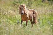 HOR 01 MB0424 01
