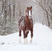 HOR 01 MB0426 01