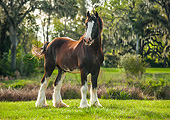 HOR 01 MB0431 01