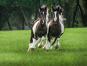 HOR 01 MB0434 01