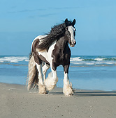 HOR 01 MB0436 01