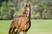 HOR 01 MB0442 01