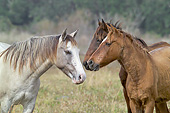 HOR 01 MB0444 01