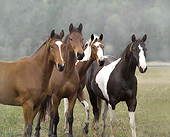 HOR 01 MB0445 01