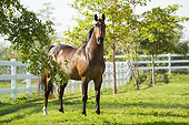 HOR 01 MB0446 01