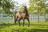 HOR 01 MB0447 01