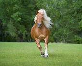 HOR 01 MB0449 01