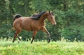 HOR 01 MB0450 01