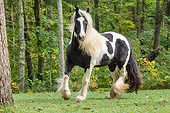 HOR 01 MB0451 01
