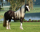 HOR 01 MB0455 01