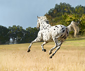HOR 01 MB0456 01