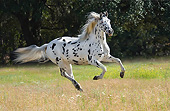 HOR 01 MB0458 01
